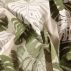 Halvpanama sand m Fingerfilodendron